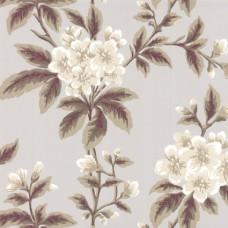 Grosvenor St - Begonia