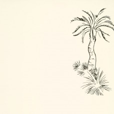 Lighthouse Palm - Pentle