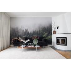 Misty Fir Forest  R16731
